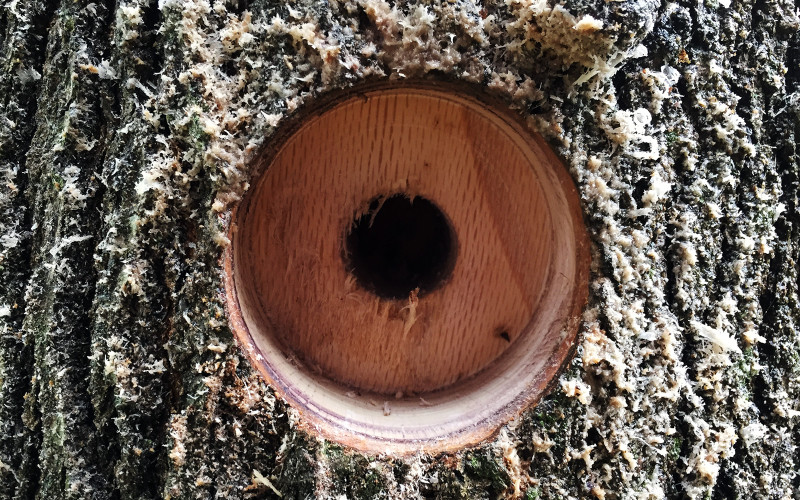 building-a-treehouse-tab-drill-hole